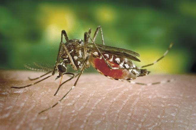 Singapore đối mặt với nguy cơ số ca sốt xuất huyết cao kỷ lục